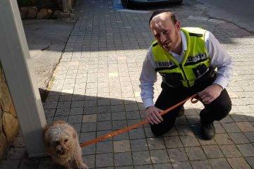 כלב ננעל בתוך רכב וחולץ על־ידי מתנדב ידידים
