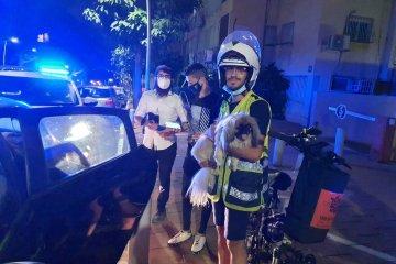 רמת גן: כלבה ננעלה ברכב לעיני בעליה • כונני ידידים חילצו אותה בשלום