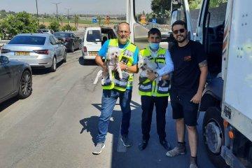 חמי יואב: שני כלבים ננעלו ברכב לעיני בעליהם • מנהלי סניף קרית גת בידידים חילצו אותם בשלום