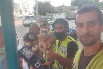 רמת גן: שני כלבים ננעלו ברכב בשגגה • כונני ידידים חילצו אותם בשלום