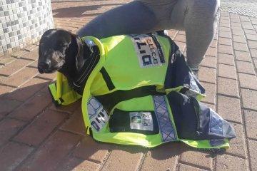 """מגדל העמק: מתנדבת ידידים הוזעקה לחלץ כלב שננעל לבדו ברכב • הכלב חולץ במהירות ובשלום • """"בדיוק סיימתי סיבוב עם הכלבה שלי ויצאתי במהירות כדי לחלץ את הכלב הנעול"""""""
