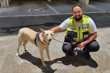 """ראשל""""צ: מתנדב ידידים הוזעק לחלץ כלבה שננעלה לבדה ברכב • הכלבה חולצה במהירות ובשלום • """"עובר אורח צלצל לידידים והזעיק אותנו"""""""