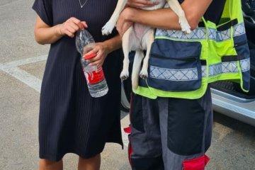 תל אביב: כלב ננעל ברכב לבדו, מתנדבי ידידים הוזעקו לחלצו •