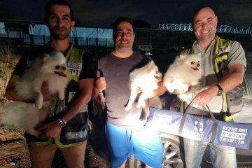 """כפר ידידיה: שלושה כלבים ננעלו ברכב לבדם, מתנדבי ידידים חילצו אותם במהירות ובשלום • """"בעל הכלבים התרגש ומיד ביקש להצטרף לארגון"""""""