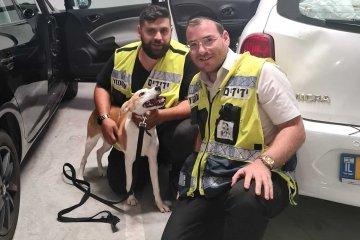 ראש העין: מתנדבי ידידים חילצו בשלום כלב שננעל ברכב לבדו