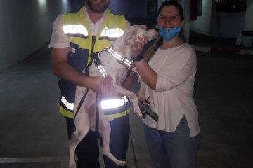 """רמת גן: כלבה ננעלה ברכב לעיני בעליה • מתנדבי ידידים חילצו אותה במהירות ובשלום • """"בעלת הכלבה התרגשה והכלבה עוד יותר"""""""