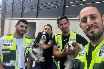 חולון: הכלבים ננעלו ברכב לעיני הבעלים