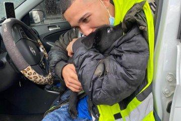 תל אביב: כלב ננעל בשגגה ברכב וחולץ על ידי כונן ידידים
