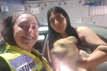 אשקלון: בתוך השבעה של בעלה על אביו ועם שבר ברגל • מתנדבת ידידים חילצה בשלום כלב שננעל לבדו ברכב