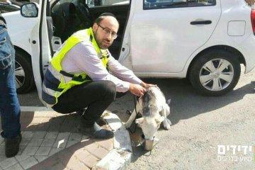 בני ברק: כלב ננעל ברכב וחולץ על ידי ידידים